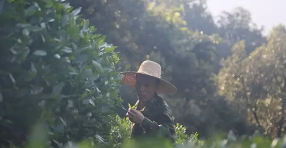 【不知名茶】茶山里的风土与人情