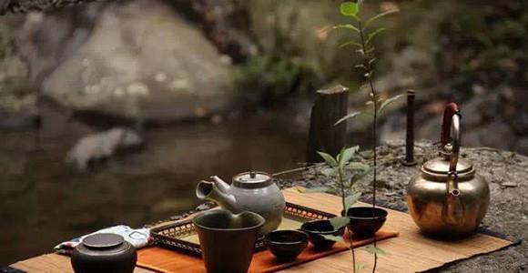 秋与白露茶